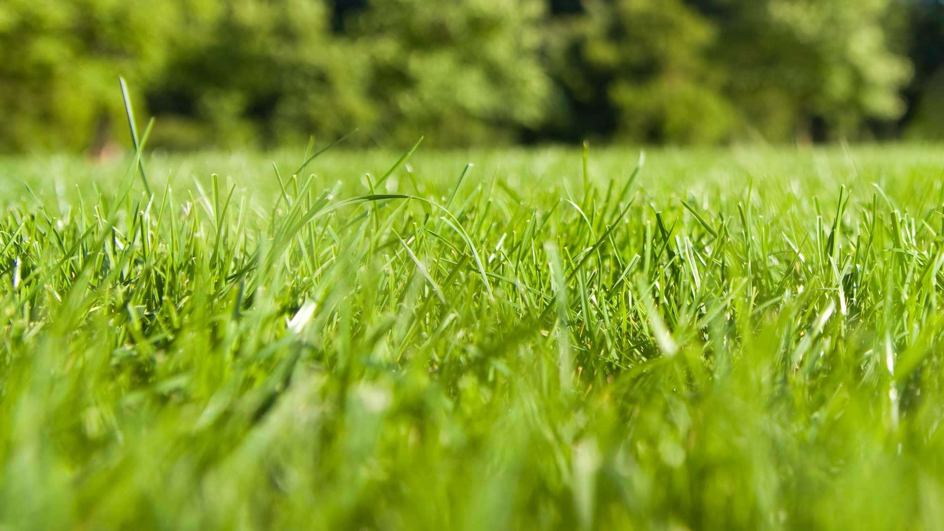 Close up photo of a healthy lush green lawn at a home in Bogalusa, LA.